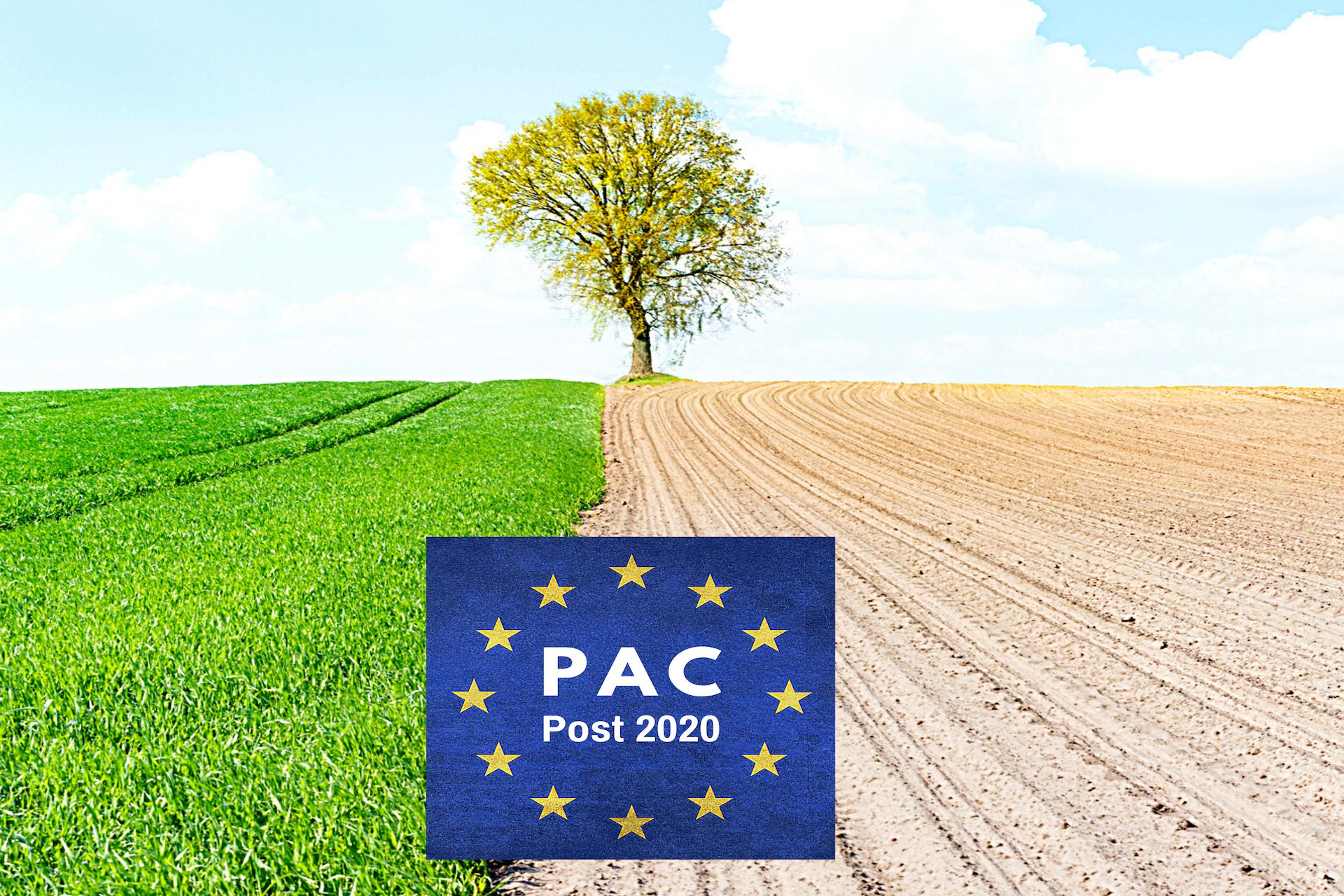 La Fase di transizione alla programmazione 2021/2027: regole vecchie con fondi nuovi. Prospettive e proposte per la Misura 19 Approccio Leader